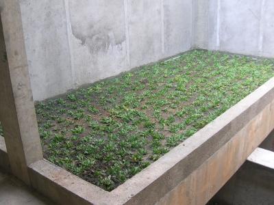 Dachy zielone - HYDROIZOLACJA DACHU, BALKONU, TARASU